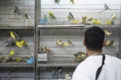 BELO HORIZONTE BRASILIEN - JULI 28: Folk som ser caged fåglar Royaltyfri Fotografi