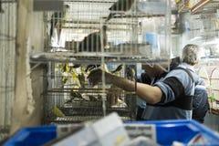 BELO HORIZONTE, BRASILIEN - 28. JULI: Leute, die eingesperrte Vögel betrachten Stockfotografie
