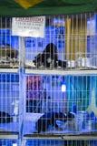 BELO HORIZONTE BRASILIEN - JULI 28: Valpar som är till salu i marknad A Royaltyfria Bilder