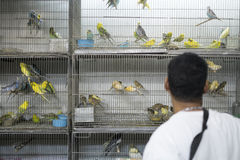 BELO HORIZONTE, BRAZIL - JULY  28: People looking at caged birds Royalty Free Stock Photography