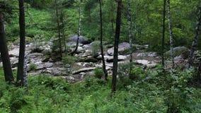 Belokurikha山河全景在阿尔泰边疆区 影视素材