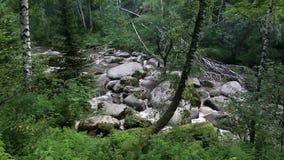 Belokurikha-Gebirgsfluss in Altai Krai Stockbilder