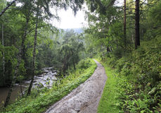 Belokurikha river in the forest on the hillside Sinyuha. Royalty Free Stock Photography