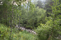 Belokurikha river in the forest on the hillside Sinyuha. Stock Images