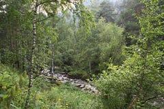 Belokurikha river in the forest on the hillside Sinyuha. Altai Krai Stock Images