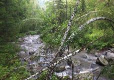 Belokurikha river in the forest on the hillside Sinyuha. Altai Krai Stock Photo