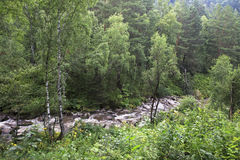 Belokurikha river in the forest on the hillside Sinyuha. Stock Photos
