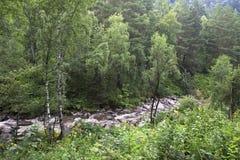 Belokurikha river in the forest on the hillside Sinyuha. Altai Krai Stock Photos
