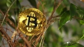 Belonging modelo real a Cryptocurrency contra ramas de la planta