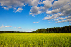 Belorussian landscape Royalty Free Stock Image