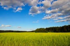 Belorussian landscape Royalty Free Stock Image