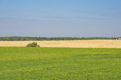 Belorussian meadows Royalty Free Stock Photography