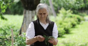 A beloved grandmother with gray long hair is standing in a garden near a wooden table and making a salad.