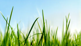 Below the grass royalty free stock photography