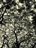 Below the tree shade Royalty Free Stock Images