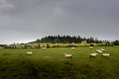 Beltany stone circle Stock Photo