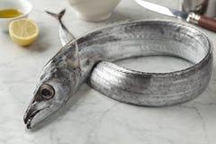 Beltfish Royalty Free Stock Images