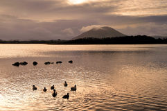 Beltra Lough. The lough lies 5 miles north-east of Newport and 8 miles North-west of Castlebar in county Mayo Stock Images