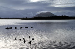 Beltra Lough. The lough lies 5 miles north-east of Newport and 8 miles North-west of Castlebar in county Mayo Stock Photos