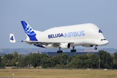 Beluga from Airbus Stock Photos