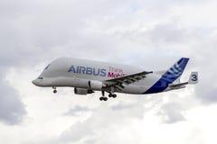 Beluga Airbus 300-600ST Supertransporter che si avvicina a Finkenwerde immagine stock