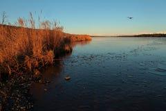 Beluga Lake i Fall med nivån royaltyfri bild
