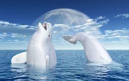 Beluga whales in front of the moon Royalty Free Stock Photos