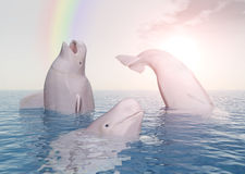 Beluga whales and rainbow Royalty Free Stock Photo