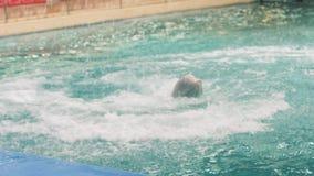 Belugavalbanhoppning och dykning i simbassäng på kapacitet i delfinarium arkivfilmer