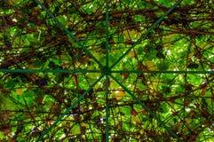 Belvédère avec le toit de raisin Photo libre de droits