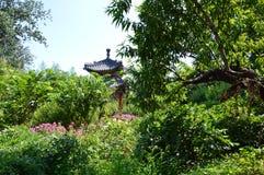 Belvédère chinois de jardin se cachant derrière des arbres Photo stock