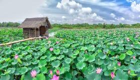Belvédère sur le champ de lotus image libre de droits