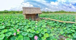 Belvédère sur le champ de lotus photographie stock libre de droits