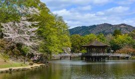 Belv?d?re d'Ukimido pendant les fleurs de cerisier photographie stock libre de droits