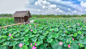 Belvedere on lotus field Royalty Free Stock Image