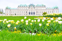 Belvedere Palace Spring Time. The Belvedere Palace in April with tulips in the front Royalty Free Stock Image