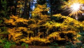 Belysning av ljus, Washington State royaltyfri foto