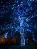 Belysning på Nabana ingen Sato, Japan Royaltyfria Bilder