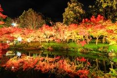 BELYSNING PÅ NABANA INGEN SATO, MIE, JAPAN - med attraktiva höstsidor Arkivfoton