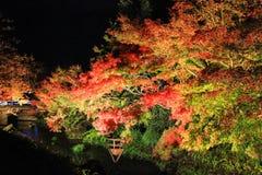 BELYSNING PÅ NABANA INGEN SATO, MIE, JAPAN - med attraktiva höstsidor royaltyfri bild