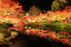 Belysning på Nabana ingen Sato, Mie, Japan, med attraktiva höstsidor Royaltyfria Foton