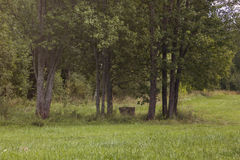 Bem entre árvores Imagens de Stock Royalty Free