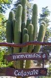 Bem-vindos de madeira assinam dentro Cafayate, Argentina Fotografia de Stock
