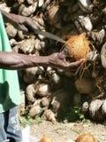 Bemannen Sie das Öffnen einer Kokosnuss mit einem großen Messer stockfoto