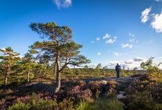 Bemannen Sie das Gehen in die Wildnis, Waldlandschaft in Norwegen, blauen Himmel und Wolken Stockbilder