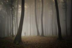 Bemannen Sie das Gehen in einen Wald mit Nebel unter enorme Bäume stockfotografie