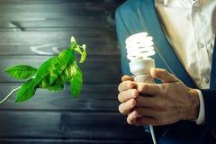 Bemannen Sie das Halten eines Glühens hell nahe dem grünen Sprösslingsbaum Lizenzfreies Stockbild