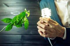 Bemannen Sie das Halten eines Glühens hell nahe dem grünen Sprösslingsbaum Stockfotografie