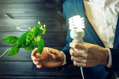 Bemannen Sie das Halten eines Glühens hell nahe dem grünen Sprösslingsbaum Stockfotos