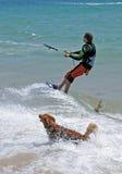 Bemannen Sie das Kitesurfing mit dem Hund des goldenen Apportierhunds, der ihn. jagt Lizenzfreies Stockfoto